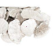Gomba, tapló 500 gr fehér karácsonyi termés