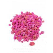 Casurina - Pink