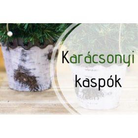 Kaspó
